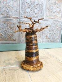 子宝☆生命力の強さで有名な母なる木 バオバブの木☆M 約25センチ