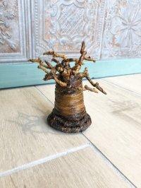 子宝☆生命力の強さで有名な母なる木 バオバブの木☆S 約12センチ