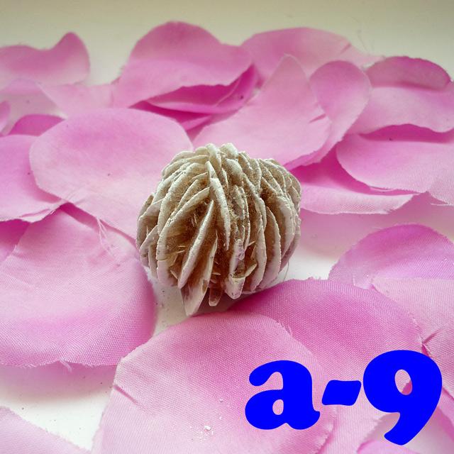 画像2: 断ち切れ!砂漠の薔薇 a-9